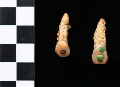 手工动物牙齿模型