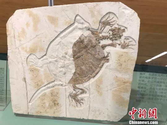 """亿年古生物化石""""花落""""上海自然博物馆"""