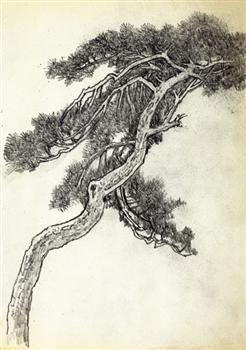 国画白描松树大全图